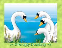 The ugly duckling 23: the beautiful swan Stock Photos