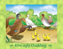 The ugly duckling 4 the ducks Royalty Free Stock Photo