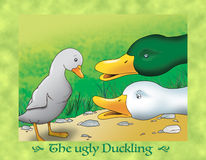 The ugly duckling 6 the grandest duck Royalty Free Stock Image