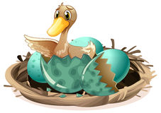 Free Ugly Duckling Hatching Egg In Nest Royalty Free Stock Image - 92377626