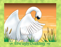 The ugly duckling 25 a new shy swan Royalty Free Stock Images