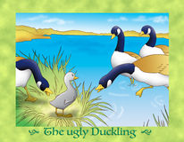 The ugly duckling 9 wild ducks Stock Photo