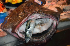 Ugly fish with big mouth and small fish inside on the table of local fish market Stock Image