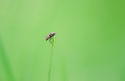 Ugly fly sitting Royalty Free Stock Photos