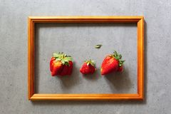 Ugly food. Organic homegrown strawberries in wooden frame on gray cement background. Strange funny imperfect fruits and vegetables. Misshapen produce royalty free stock images