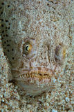 Ugly looking fish. On sand Royalty Free Stock Photo