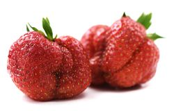 Ugly organic heirloom home grown strawberries isolated Stock Photo