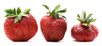 Ugly organic home grown strawberries isolated. Closeup stock photography