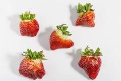 Ugly organic strawberries isolated on white background stock image