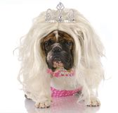 Ugly princess Royalty Free Stock Photo