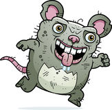 Ugly Rat Running Stock Image