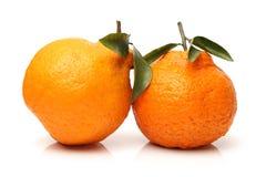 Ugly tangerine Stock Image