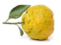 Ugly tangerine Royalty Free Stock Photo