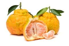 Ugly tangerine Royalty Free Stock Photos