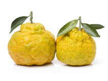 Ugly tangerine Royalty Free Stock Photography