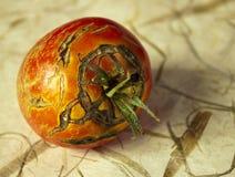 Ugly tomato Stock Photos
