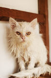 Ugly wet kitten Stock Photo