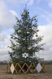 Ugly Xmas fir tree Stock Photos