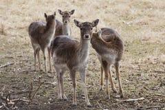 Ugory Deeron łąka w jesieni fotografia royalty free