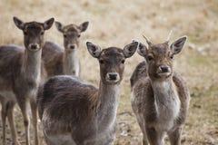 Ugory Deeron łąka w jesieni zdjęcia stock