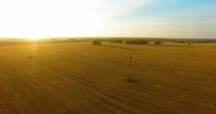 UHD 4K鸟瞰图 在黄色麦子农村领域的空中飞行 影视素材