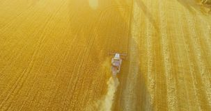 UHD 4K aerial view. Low flight over combine harvester gathers the wheat at yellow rural field. stock video