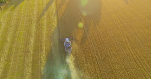 UHD 4K aerial view. Low flight over combine harvester gathers the wheat at yellow rural field. stock video footage