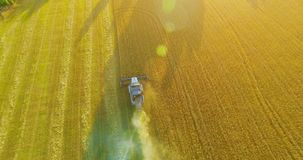 UHD 4K aerial view. Low flight over combine harvester gathers the wheat at yellow rural field. stock footage
