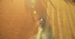 UHD 4K aerial view. Low flight over combine harvester gathers the wheat at yellow rural field. Sunny summer day. Sun rays on horizon. Horizontal movement stock video