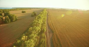 UHD 4K aerial view. Low flight over green and yellow wheat rural field and tree line. UHD 4K aerial view. Low flight over tree line and yellow wheat rural field stock video