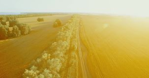 UHD 4K aerial view. Low flight over green and yellow wheat rural field and tree line. UHD 4K aerial view. Low flight over tree line and yellow wheat rural field stock video footage