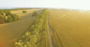 UHD 4K aerial view. Low flight over green and yellow wheat rural field and tree line stock footage