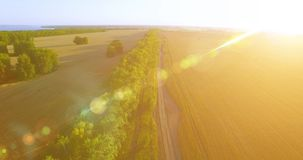 UHD 4K aerial view. Low flight over green and yellow wheat rural field and tree line stock video footage