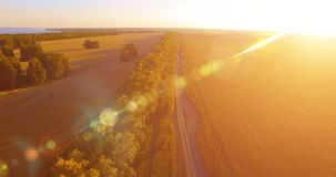 UHD 4K aerial view. Low flight over green and yellow wheat rural field and tree line. UHD 4K aerial view. Low flight over tree line and yellow wheat rural field stock footage