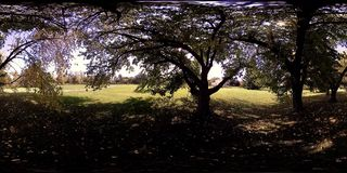 UHD 4K 360 VR Virtual Reality of a city park recreation area. Trees and green grass at autumn or summer day. Path and sun rays. Original sound stock footage