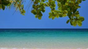 UHD tiré de la plage tropicale banque de vidéos