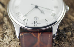 Uhr auf Baum-Barke 8065 Lizenzfreie Stockfotografie