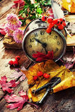 Uhr auf dem Hintergrund von gefallenen Blättern Stockfotografie