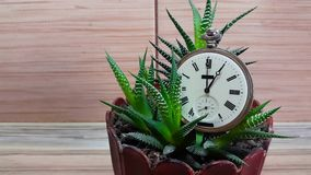 Uhr in der Blume vor dem hintergrund einer hölzernen Wand stock footage