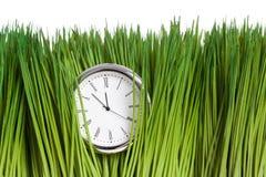 Uhr und grünes Gras Lizenzfreies Stockfoto
