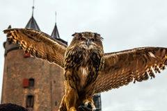 Uhu gegen Muiderslot-Schloss holland Lizenzfreies Stockfoto