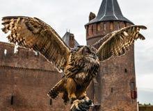Uhu gegen Muiderslot-Schloss holland Stockbilder