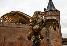 Uhu gegen Muiderslot-Schloss holland Lizenzfreies Stockbild