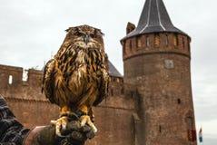 Uhu gegen Muiderslot-Schloss holland Lizenzfreie Stockbilder