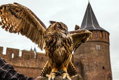 Uhu gegen Muiderslot-Schloss holland Lizenzfreie Stockfotografie
