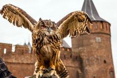 Uhu gegen Muiderslot-Schloss holland Stockfotografie