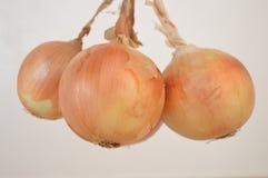 Uien bruine groente Royalty-vrije Stock Afbeelding