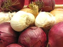 Uien en garlics Royalty-vrije Stock Afbeeldingen