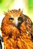 Owl Under The Sun stock afbeeldingen