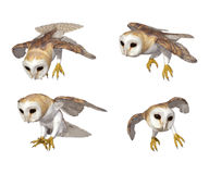 Uil vector illustratie
